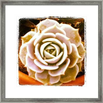 #cactus #rose #plant #green  #pretty Framed Print