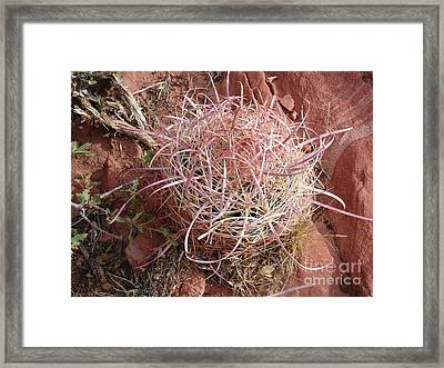 Cactus Framed Print by Silvie Kendall