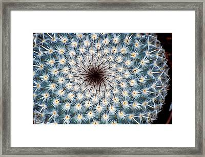 Cactus Spines Framed Print by Dr Keith Wheeler