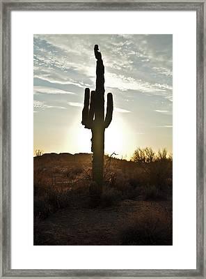 Cactus Sunset Framed Print by Kenny Jalet
