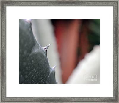 Cactus Thorn Framed Print