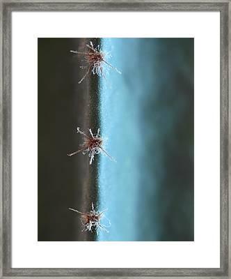 Cactus Web Framed Print by Stellina Giannitsi
