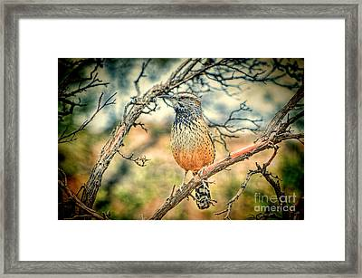 Cactus Wren Framed Print by Donna Greene