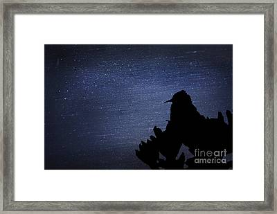 Cactus Wren In The Night Framed Print by Donna Greene