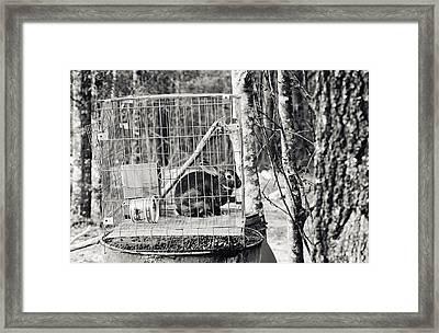 Caged Rabbit Framed Print by Floyd Smith