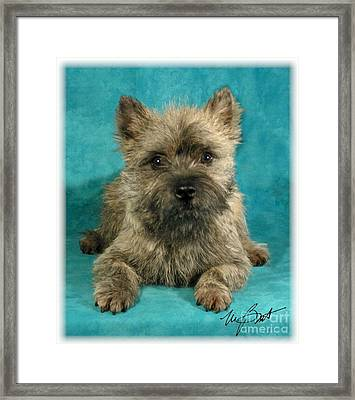 Cairn Terrier Pup Framed Print by Maxine Bochnia