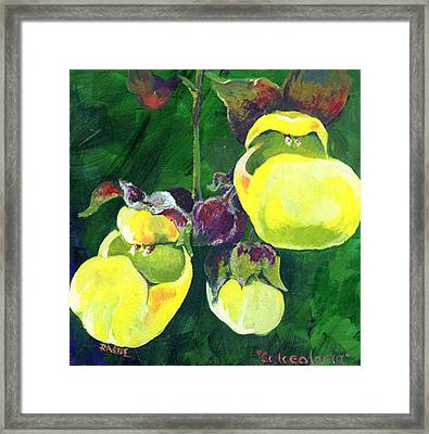 Calceolaria Framed Print by Raette Meredith