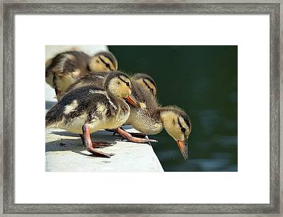 Calculating The Odds Framed Print by Fraida Gutovich