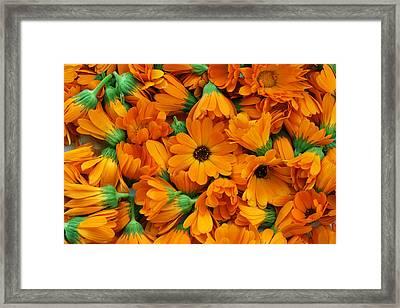 Framed Print featuring the photograph Calendula Flowers by Aleksandr Volkov