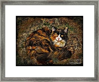 Calico Cat Framed Print by Joan  Minchak