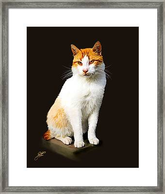 Calico Framed Print by Tom Schmidt