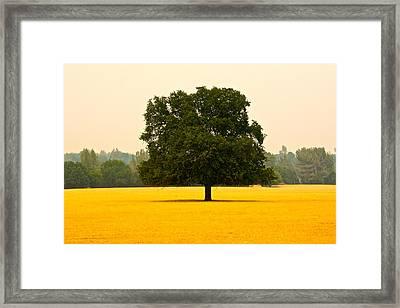 California Oak Framed Print