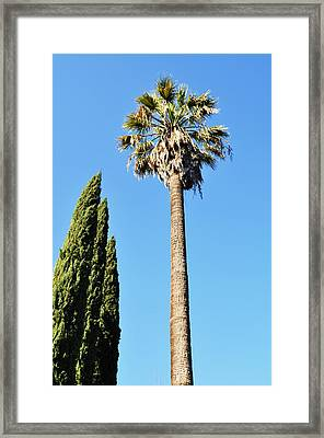 California Palm Framed Print by Todd Sherlock