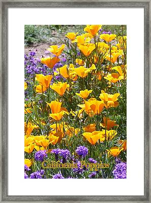 California Poppies Framed Print by Carla Parris