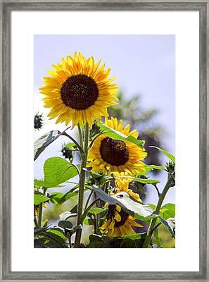 California Sun Framed Print