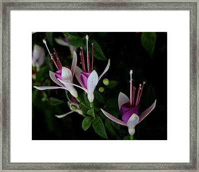 California Trio Framed Print by Karen Harrison