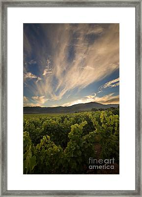 California Vineyard Sunset Framed Print by Matt Tilghman