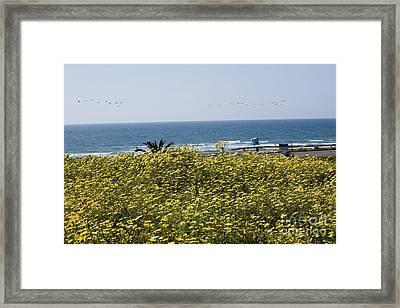 California Wildflowers Framed Print by Daniel  Knighton