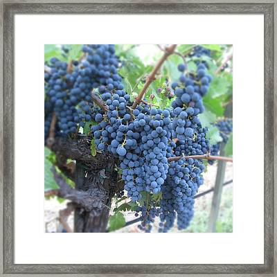 Calistoga Bloom Framed Print by Jean Macaluso