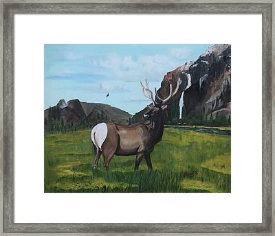 Call Of Nature Framed Print by Carolyn Ardolino