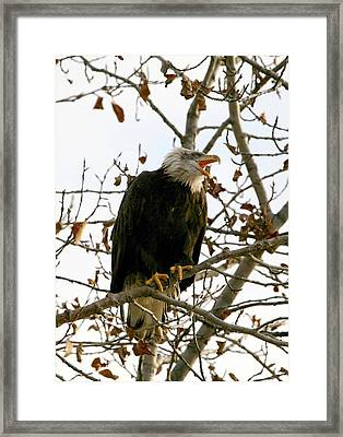 Call Of The Wild 2 Framed Print by Carrie OBrien Sibley