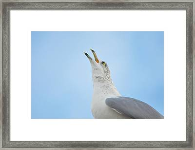 Call Of The Wild Framed Print by Bill Cannon
