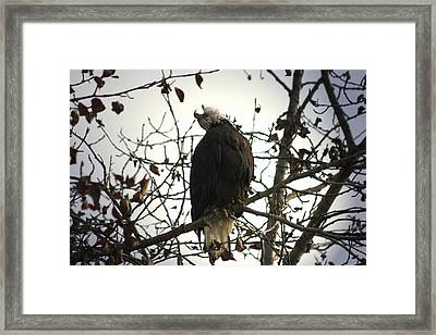 Framed Print featuring the digital art Call Of The Wild by Carrie OBrien Sibley