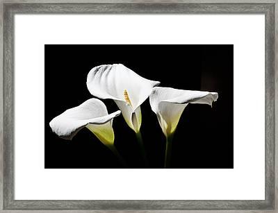 Calla Framed Print by Ivan Vukelic