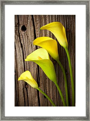Calla Lilies Against Wooden Wall Framed Print by Garry Gay