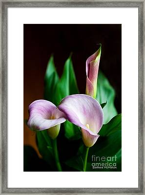 Framed Print featuring the photograph Calla Lily by Barbara McMahon