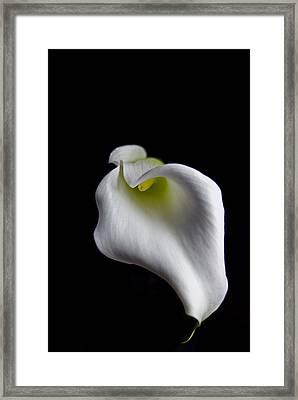 Calla Lily Framed Print by Elsa Marie Santoro