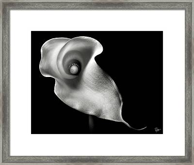 Calla Lily In Black And White Framed Print by Endre Balogh