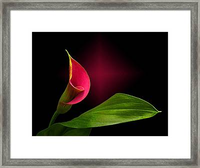 Framed Print featuring the photograph Calla Lily by Judy  Johnson