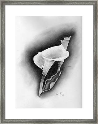Calla Lily Framed Print by Lou Knapp