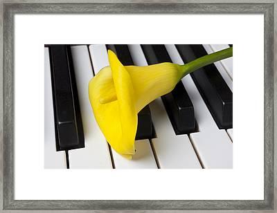 Calla Lily On Keyboard Framed Print by Garry Gay