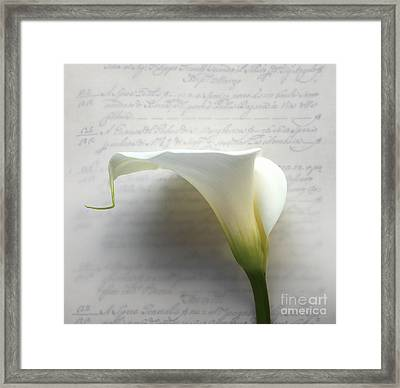 Calla Lily On Old Script Writing Framed Print by Ruby Hummersmith