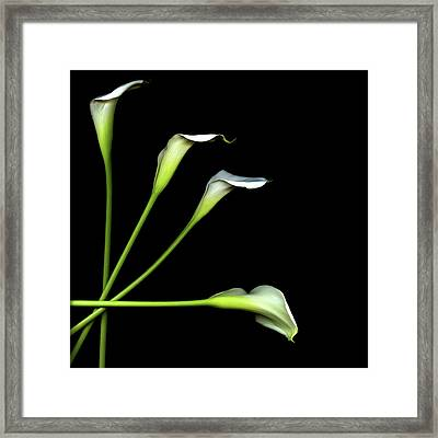 Calla Lily Framed Print by Photograph by Magda Indigo