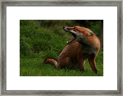 Calling The Brothers Framed Print by Jacqui Collett
