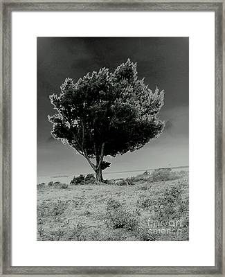 Framed Print featuring the photograph Calms by Amy Sorrell