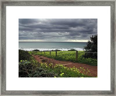 Cambria Trail Framed Print