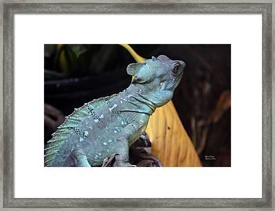 Cameleon Blues Framed Print