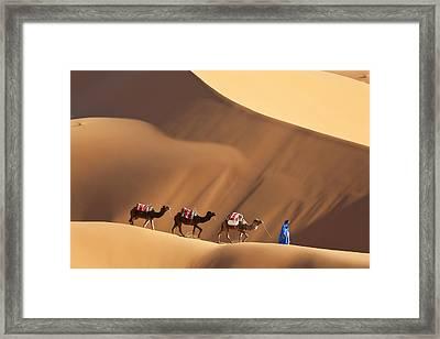 Camels & Dunes, Erg Chebbi, Sahara Desert, Morocco Framed Print by Peter Adams