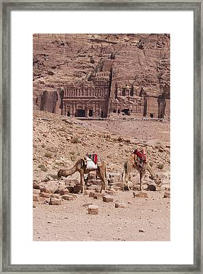 Camels In Front Of The Royal Tombs Petra Framed Print by Martin Child