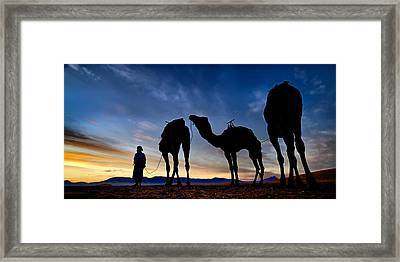 Framed Print featuring the photograph Camels  by Okan YILMAZ