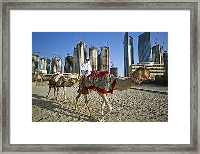 Camels On Beach With High-rises In Background Framed Print