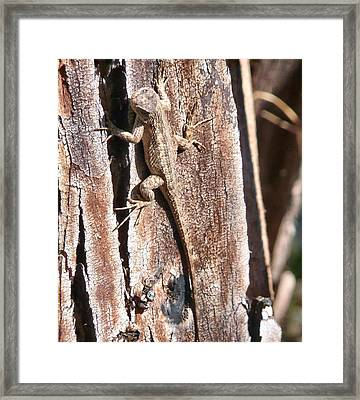 Camouflage Framed Print by E White