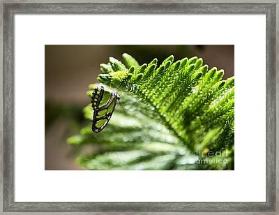 Camouflage Framed Print by Leslie Leda