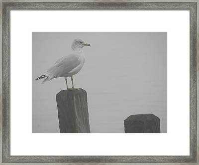 Camouflaged Seagull Framed Print by Dennis Leatherman