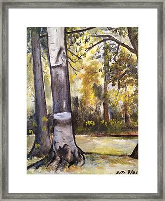 Camp Sebago Trees Framed Print by Victor SOTO