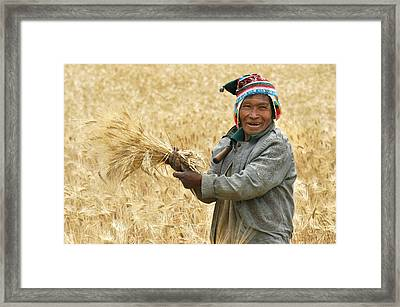 campesino cutting wheat. Republic of Bolivia. Framed Print